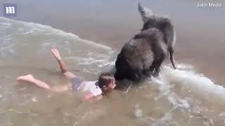 Chú chó trung thành cố gắng cứu cô chủ nhỏ
