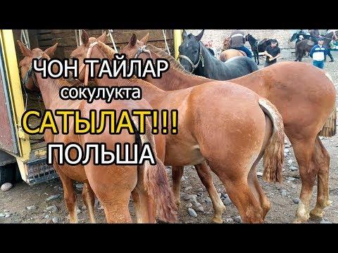 Тайлар сатылат// Сокулукта// Польшадан// тел.0559701070