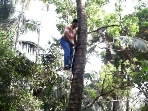 Coconut Tree Climbing Using Machine In Fire Station Youtube