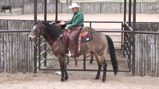 "Ride Smart with Craig Cameron ""Choosing a Horse."""
