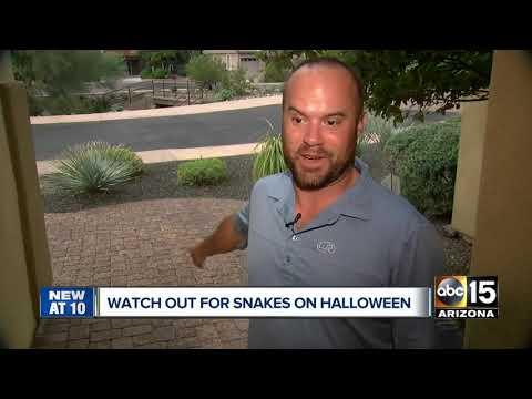 Scott Sloan - VIDEO: Arizona Company Offers Halloween Snake Removal