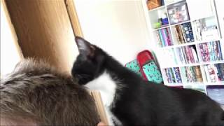 Former Bottle Baby Kitten Grooming Foster Mom