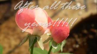 Video After All These Years With Lyrics download MP3, 3GP, MP4, WEBM, AVI, FLV Agustus 2018