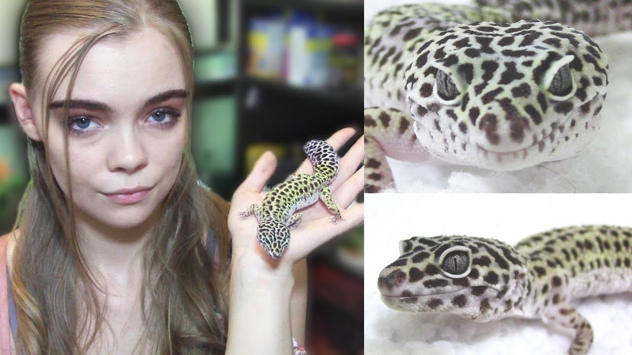 Watch This Before Getting A Leopard Gecko Youtube