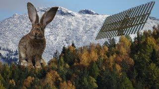 Значение ушей в жизни кролика