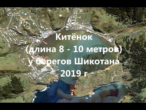 2019 г  Китёнок у берегов Шикотана