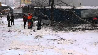 видео Вырубка зеленых насаждений. Адвокат помог избежать штрафа