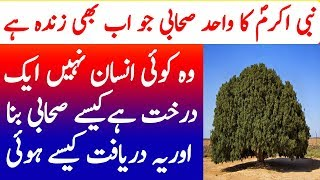 Nabi Akram SAW ka Sahabai Darakht | The Blessed Tree History | Studio One