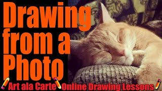 How to draw a cat from a photograph