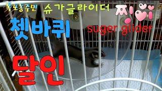 [kobo jeong] 슈가글라이더 쳇바퀴 달인!!Su…