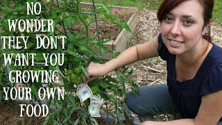 Modern Homesteading = Growing MONEY! thumbnail
