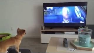 chien qui aboie