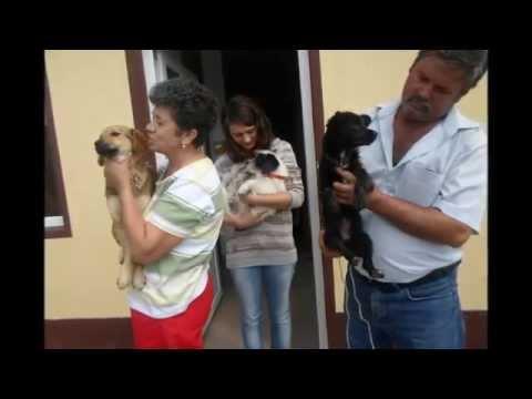 Animal Spay/Neuter International and Romania Animal Rescue Slideshow
