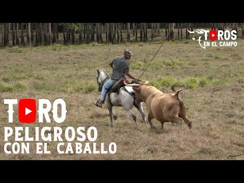 TORO PELIGROSO CON LOS CABALLOS