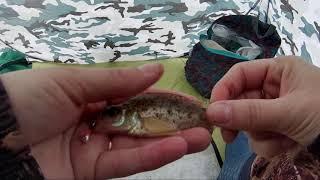 Первая весенняя рыбалка