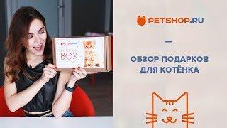 ОБЗОР PETSHOP BOX ДЛЯ КОТЯТ ♥ ПОДАРКИ ДЛЯ КОТЕНКА