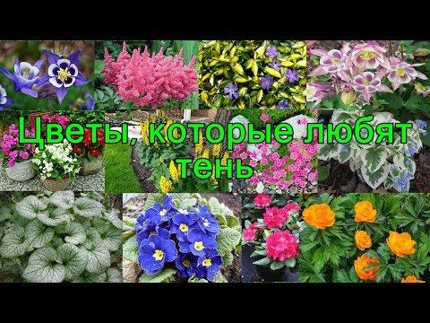 Цветы, которые любят ТЕНЬ.