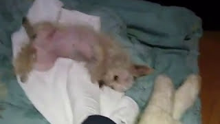 beautiful story about a dog being rescued from euthanasia rescue dog peta save the animals