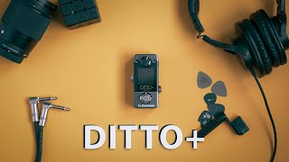 Ditto+ Looper TC Electronic | First Impression & Review