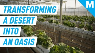 Producing Food, Water, and CLEAN ENERGY in The Desert | Mashable Originals
