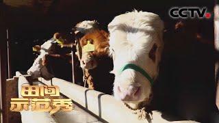 《田间示范秀》 20210107 守护过渡期的牛宝宝|CCTV农业 - YouTube