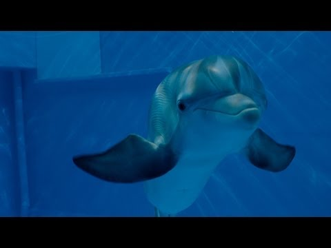 Dolphin Tale 2 Official Main Trailer Hd
