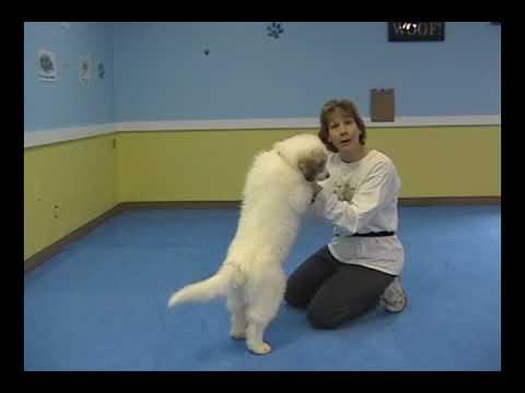 Let's Raise a Puppy!  Lesson 1: Sit, Down, Come & Collar Grabs