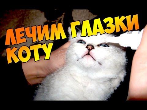 У кошки слезятся глаза. Болят, гной, слиплись, воспалились.