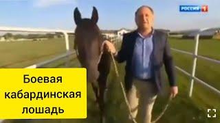 Кабардинская порода выводилась как походная боевая лошадь