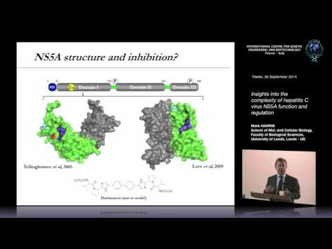 M. Harris -Insights into the complexity of hepatitis C virus NS5A function and regulation
