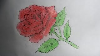 How to draw a beautiful rose step by step.