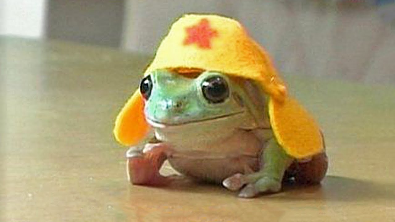 How Cute Can Frog Be? Watch This! | Pets Town