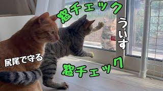 野良猫襲来に窓の安全チェック欠かさない猫がかわいい!