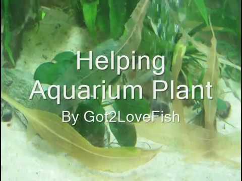 Helping Dying Aquarium Plant