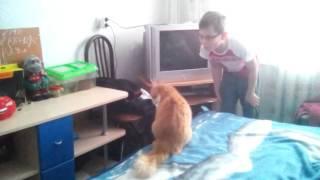 Великая драка кота и человека