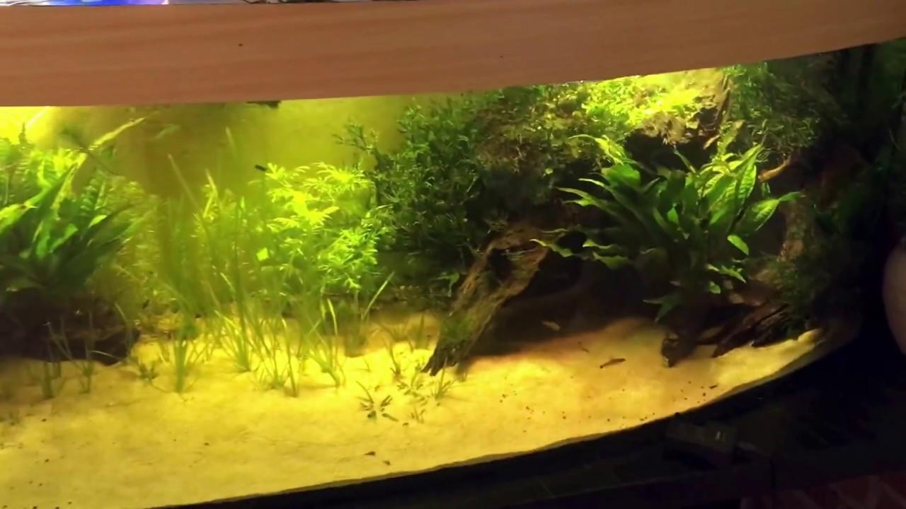 Aquarien Pflanzen Selber Pflanzen Vom Samen Bis Zur Aquaplanze Teil