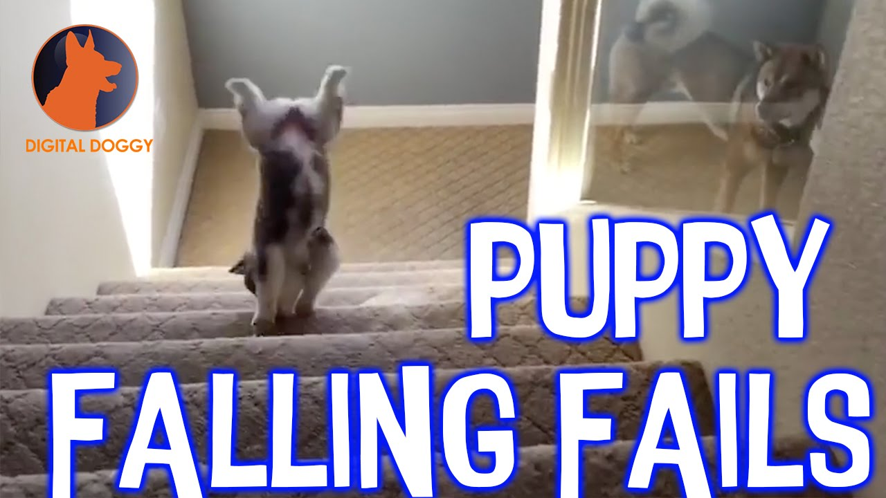 Cute Puppies Falling Over
