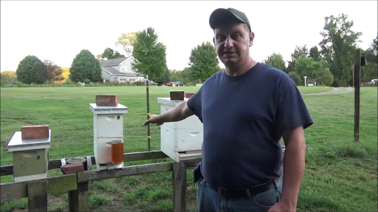 Download Beekeeping- 2018 Fall Hive Feeding and Winter Prep Plans