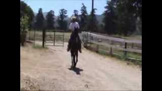 Country Pleasure TWH For Sale- Rider