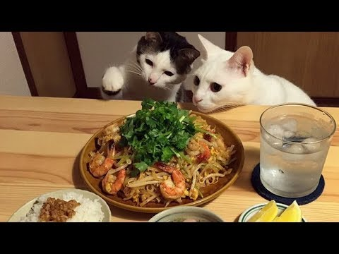 I SWEAR this is the FUNNIEST thing you'll EVER SEE! // ULTRA funny ANIMAL compilation