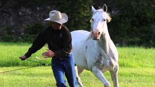 The Art Of Liberty Training For Horses Preview
