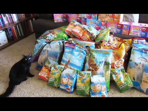 How To Feed 100+ Feral Cats