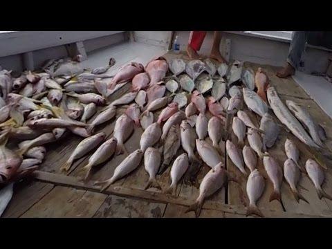 Mancing Ikan Kuwe Lilin Trip Mundu Kompaban Tal Youtube