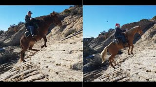 Horse Vs Mule: Who Is More Sure Footed?