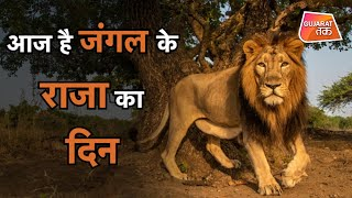 World Lion Day Celebration 2020   GujaratTak