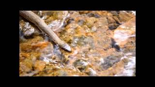 2012. Queen Snake