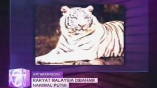 Pekerja Zoo Singapura Rakyat Malaysia Mati Dibaham Harimau