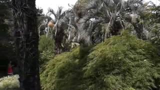 Абхазия   Сухум, Ботанический сад 3