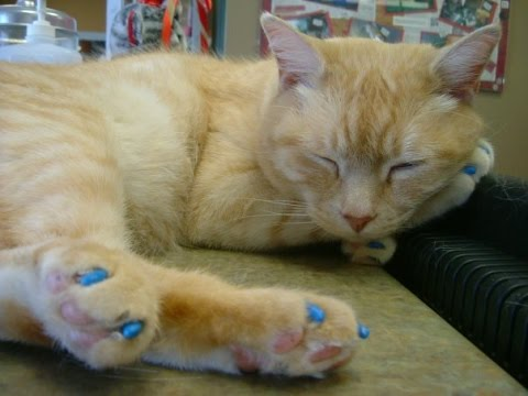 How To Apply Soft Paws
