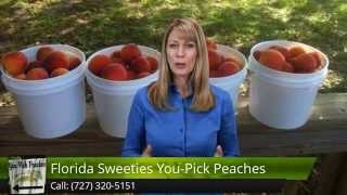 Florida Sweeties You Pick Peaches Dade City, Fl